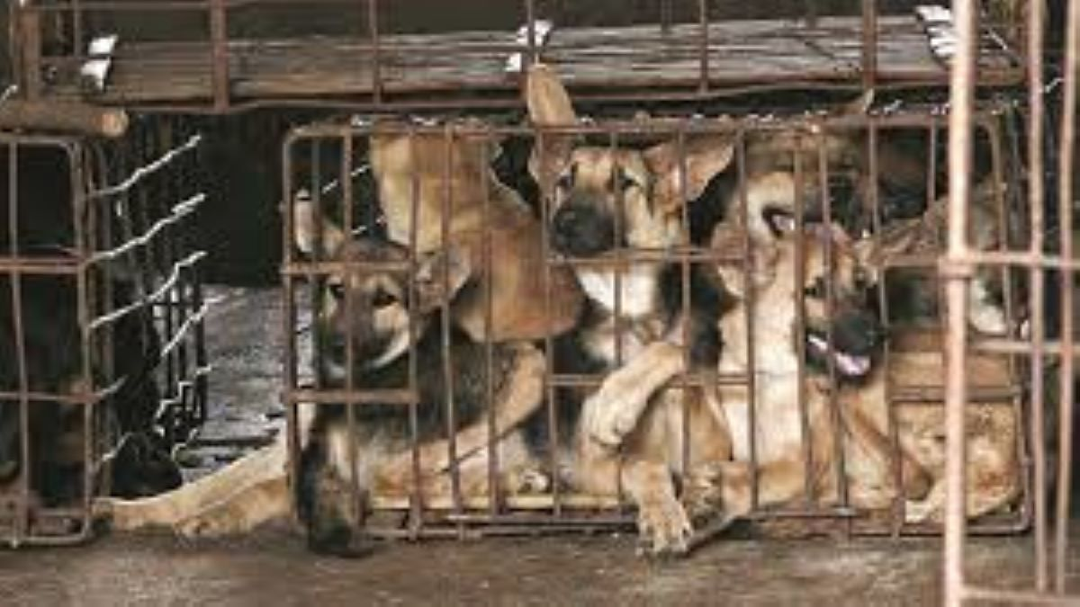 Dog meat trade in China
