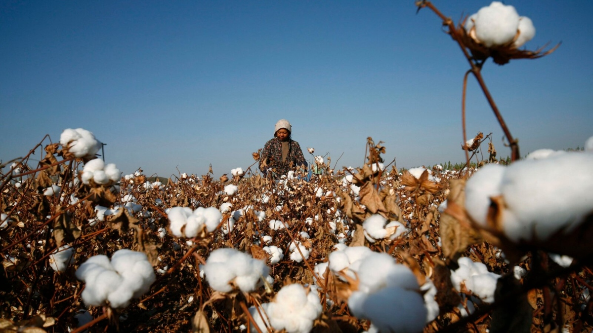 US BAN ON CHINESE COTTON